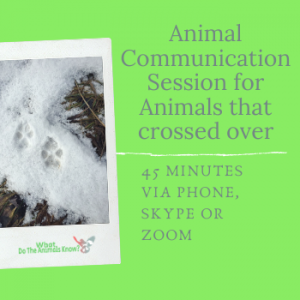 Animal Communication Session for Animals that Crossed Over